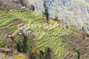 nepal, terrace, agriculture