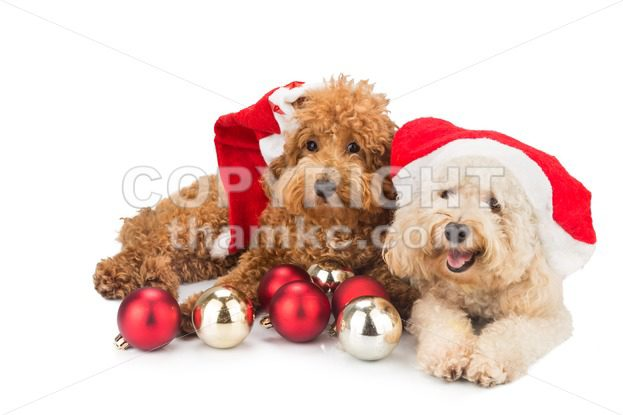 Free Puppies Costume & Cute Puppy Clothes Photo - 3