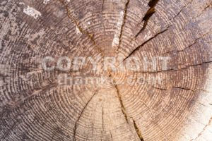 Closeup of cross section of tree trunk with rings - ThamKC Royalty-Free Photos