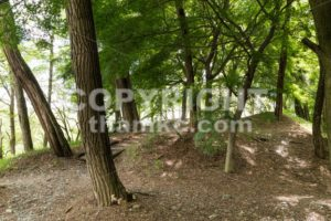 Nature path in serene forest - ThamKC Royalty-Free Photos