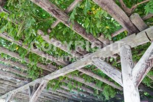 Serene wooden pergola with foliage and leafs - ThamKC Royalty-Free Photos