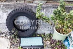 Used tires traps rain water risk breeding ground for mosquito - ThamKC Royalty-Free Photos