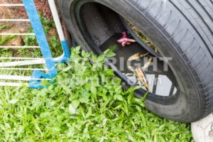 Used tyres potentially store stagnant water and mosquitoes breeding ground - ThamKC Royalty-Free Photos