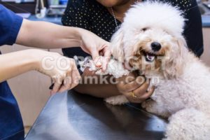 Vet trim cut dog nails at clinic - ThamKC Royalty-Free Photos