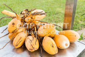 Bunch of fresh yellow young coconut for refreshing drinks - ThamKC Royalty-Free Photos