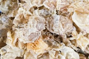 Dried fish maw or bladder, a delicacy in Chinese cuisine - ThamKC Royalty-Free Photos
