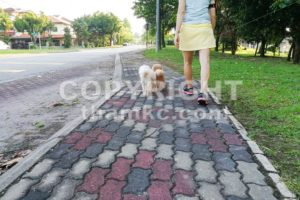 Women walking obedient smart poodle dogs without needing leash - ThamKC Royalty-Free Photos