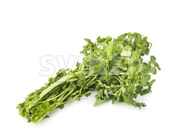 Bundle of freshly harvested watercress rich in vitamin and nitrate. Stock Photo