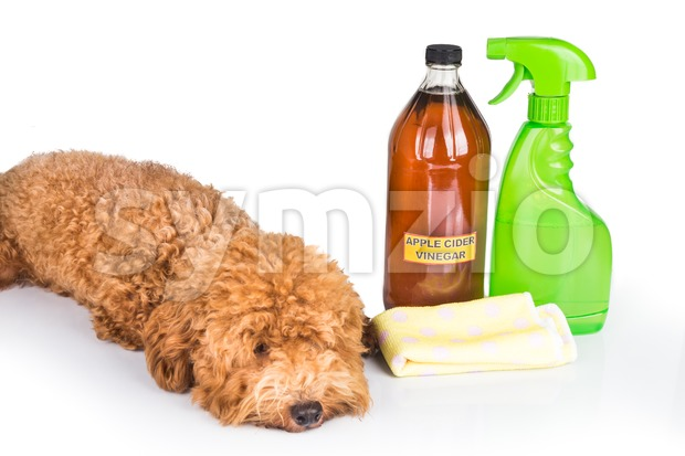 Apple cider vinegar effective as natural flea repellent and all purpose cleaner for pets. Stock Photo