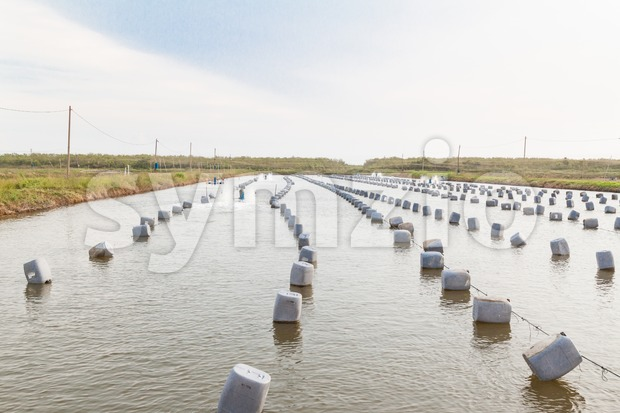 Aquacultural farm for oysters Stock Photo