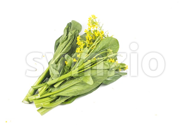 Bunch of floral choy sum green vegetable popular among the Chinese