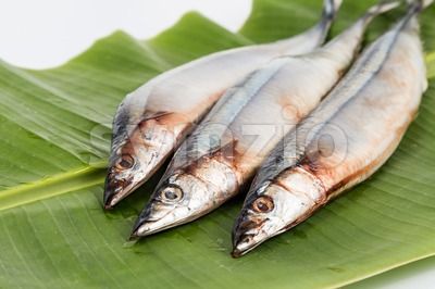 Seasonal fresh Japanese Sanma fish on placed on green leaf Stock Photo