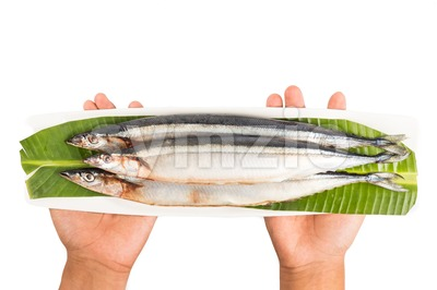 Hand holding seasonal fresh Japanese Sanma fish on placed on plate Stock Photo