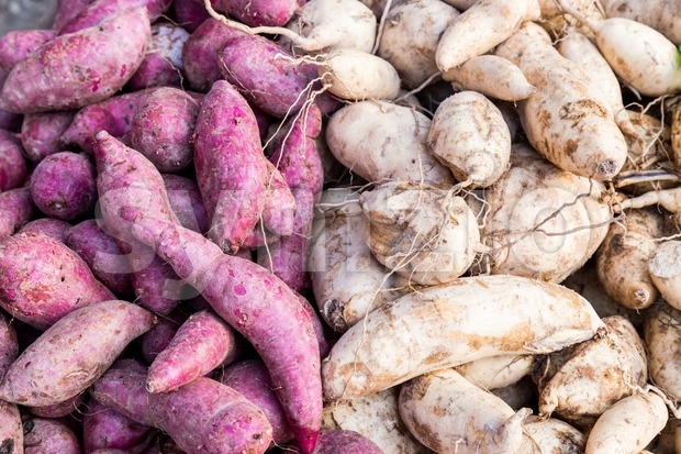 Heaps of freshly harvested purple and yellow skin organic sweet potato Stock Photo