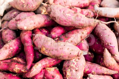 Heaps of freshly harvested organic sweet potato Stock Photo
