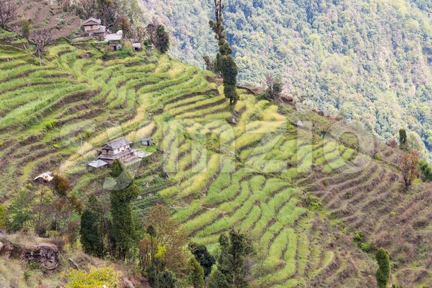 Scenic view of terraced plantation on hill slopes in Nepal