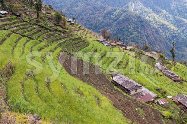Scenic view of terraced plantation on hill slopes in Nepal Stock Photo