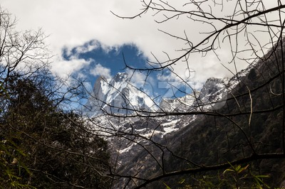Scenic peak of Mount Machapuchare of Nepal or popularly known as Fish Tail against tree branches Stock Photo