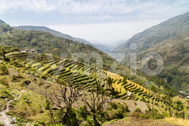 Scenic terraced plantation on hill slopes in Nepal Stock Photo