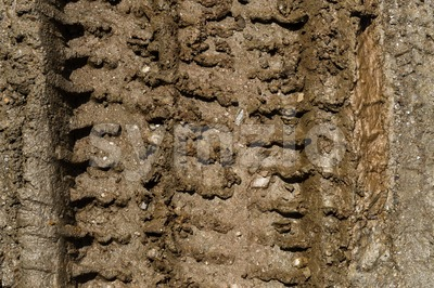 Tire tracks on muddy dirt road Stock Photo