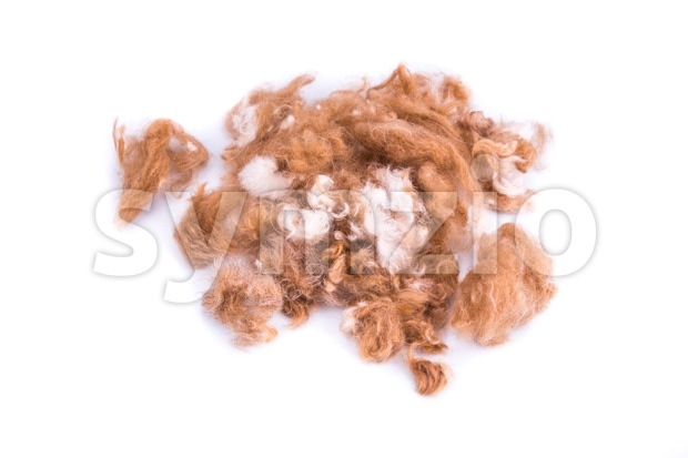 Group of dog fur trimmed during grooming in salon Stock Photo