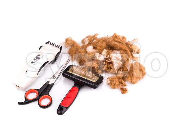 Grooming accessories of clipper, scissor, and brush with fur and poodle dog in white background