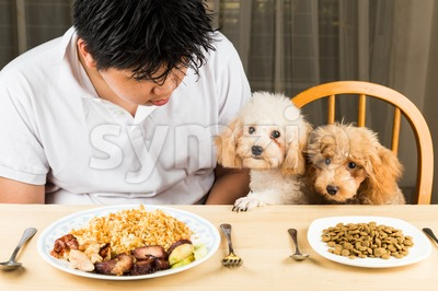 A teenager with two poodle puppies on dining table with plateful of food and kibbles Stock Photo