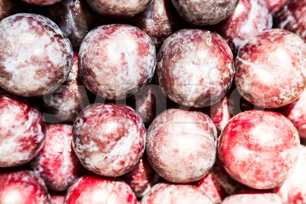 Pile of fresh plum with waxy white coating Stock Photo
