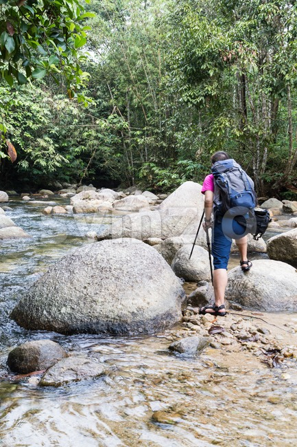 Hiker crossing river while hiking in a tropical forest Stock Photo