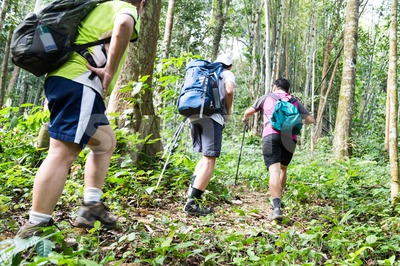 Group of people hiking in a natural tropical forest Stock Photo