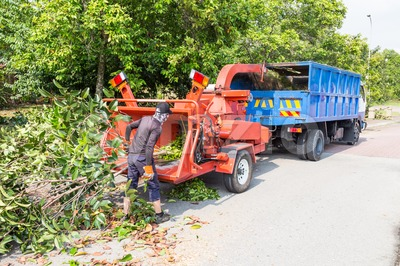 Workers loading tree branches into wood chipper machine for shredding Stock Photo