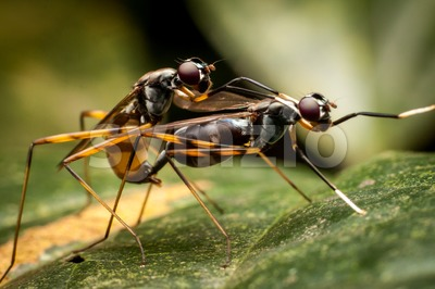 Closeup on ants mating on piece of leaf in forest Stock Photo