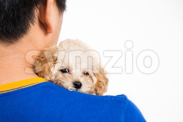 A teenager holding and cuddling a cute poodle puppy with love Stock Photo
