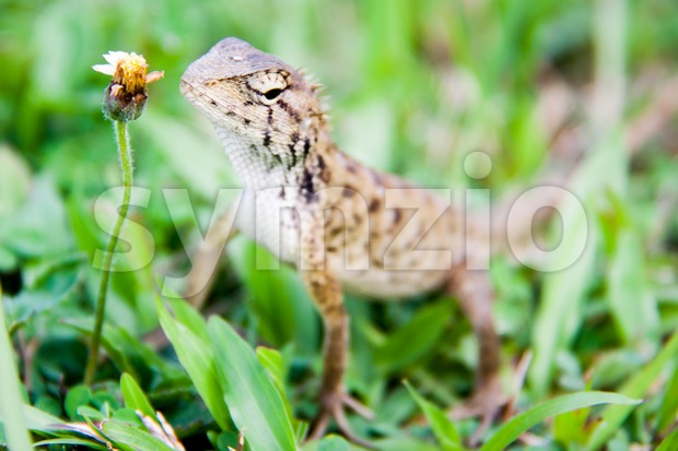 Baby monitor lizard crawling on grass