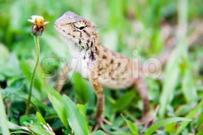 Baby monitor lizard crawling on grass Stock Photo