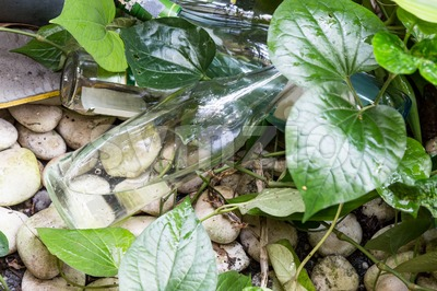 Empty bottles store stagnant water and breeding ground for mosquito Stock Photo