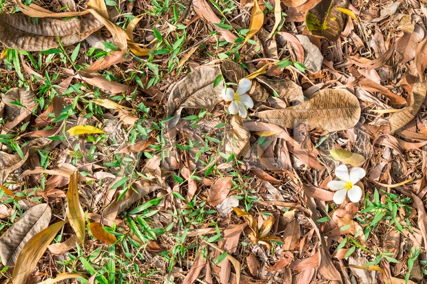 Beautify texture of dried leafs on grass at park Stock Photo