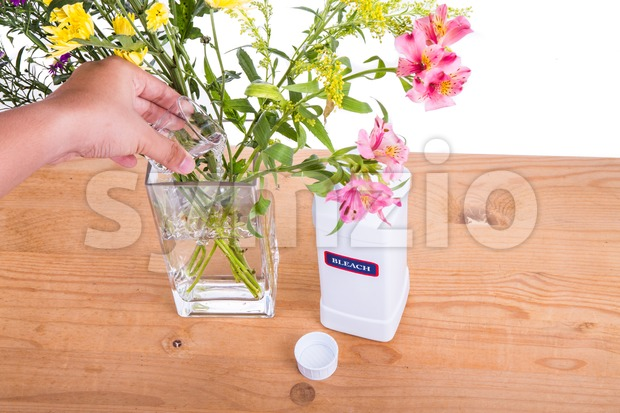 Add liquid bleach into vase with water to keep flowers fresher Stock Photo