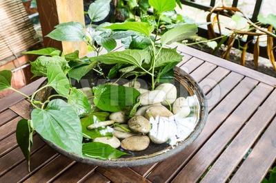Potted plants with stagnant water potentially become mosquito breeding ground Stock Photo