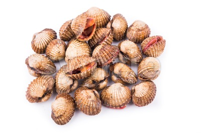 Heap of fresh and living cockles with white background Stock Photo