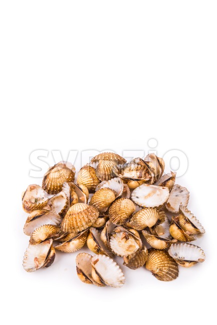 Cockles shells are  recycled as partial cement replacement in concrete Stock Photo