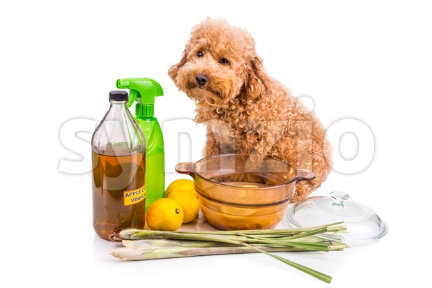 Apple cider vinegar, lemon and lemongrass home remedy, safe and effective formula to repel fleas from pets and odor neutralizer