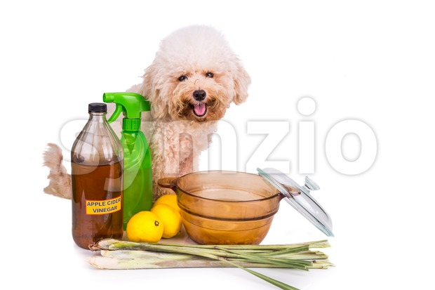 Apple cider vinegar, lemon,  lemongrass effective flea repellent home formula Stock Photo