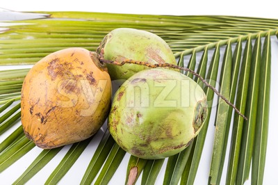 Three young and juicy organic green coconut on palm leaf Stock Photo