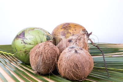 Young and old organic green brown coconut on palm leaf Stock Photo