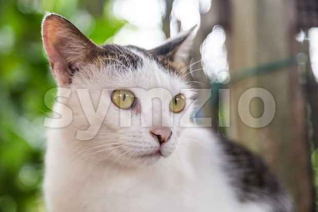 Closeup and selective focus on cat face resting outdoor