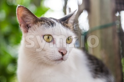 Closeup and selective focus on cat face Stock Photo