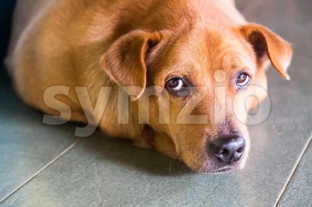 Closeup on dog face looking directly into camera Stock Photo