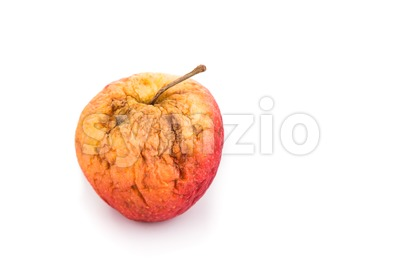 Rotten and decomposing red apple on white background Stock Photo