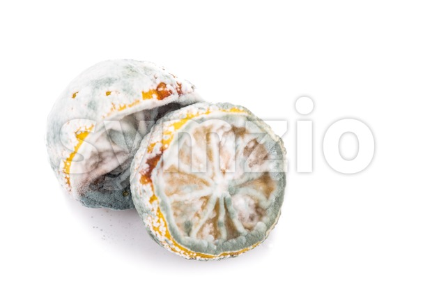 Rotten, moldy and decomposing lemon on white background Stock Photo